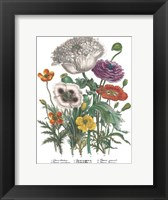 Framed Papaver Horridum