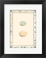 Framed Antique Eggs II