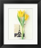 Framed Tulip, Euro-Floral