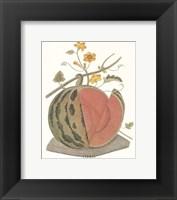 Framed Melon - Watermelon