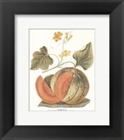 Framed Melon - Persian