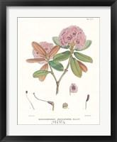 Aeruginosum Framed Print