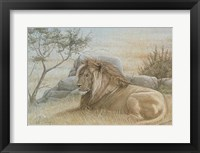 Framed Golden Lion