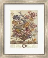 Framed April/Twelve Months of Flowers, 1730