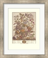 Framed May/Twelve Months of Flowers, 1730
