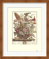 Framed August/Twelve Months of Flowers, 1730