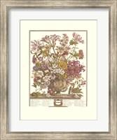 Framed October/Twelve Months of Flowers, 1730