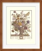 Framed November/Twelve Months of Flowers, 1730
