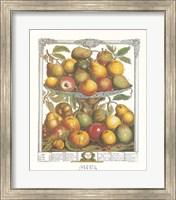 Framed February/Twelve Months of Fruits, 1732