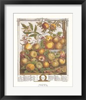May/Twelve Months of Fruits, 1732 Framed Print