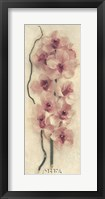 Framed Branch with Orchid