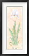 Framed Iris Soliloquy II