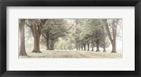Framed Avenue of Trees