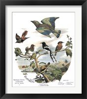 Framed Asian Birds