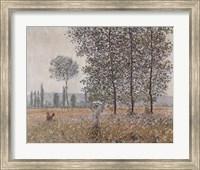 Framed Fields in Spring