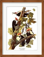 Framed Pileated Woodpecker