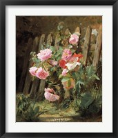 Framed Pink Roses by a Garden Fence