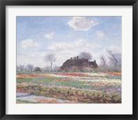 Framed Tulip Fields at Sassenheim