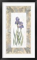 Framed Emperor Iris