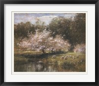 Framed Sheep Grazing Under Apple Blossoms