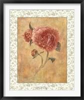 Framed Antique Peony I
