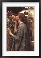 Framed Soul of the Rose