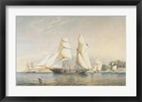 Framed Kestrel, R.Y.S.