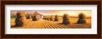 Framed Harvest