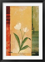 Two White Tulips Framed Print