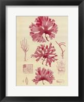 Framed Britich Seaweed Plate IX