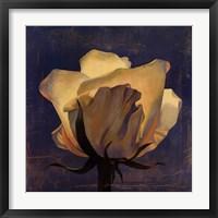 Glowing White Rose Framed Print