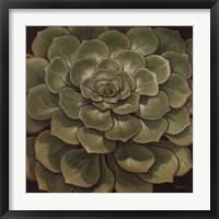 Succulent I Framed Print