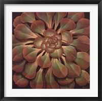 Succulent II Framed Print