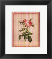 Botanical Rose I Framed Print