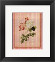 Botanical Rose II Framed Print