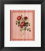 Framed Botanical Rose IV