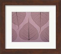 Framed Sheer Leaves II