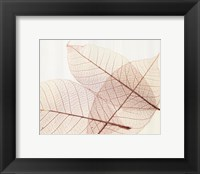 Framed Sheer Leaves III