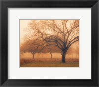 Memory of Trees Framed Print