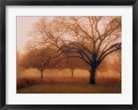 Memory of Trees Framed Print