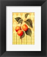 Botanical Apricot Framed Print