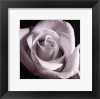 Framed Open Rose