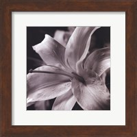 Framed Pure Lily