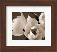 Framed Winter Magnolia I