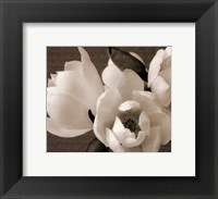 Winter Magnolia I Framed Print