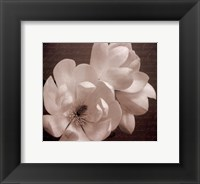 Winter Magnolia II Framed Print