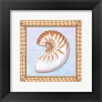 Framed Seashell I