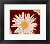Framed White Daisy On Red