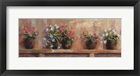 Petunias in Pots Framed Print