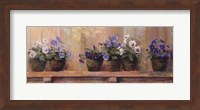 Framed Violets in Pots